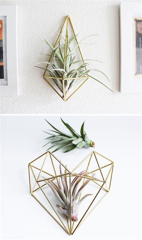 air plant wall holder 12 elegant ways to bring air plants into your home