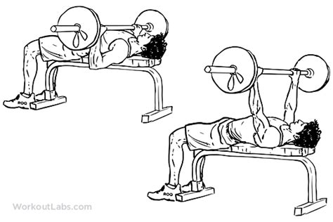 barbell bench press exercise barbell bench press chest press workoutlabs