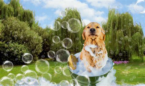 toelettatura cani pavia lavaggio e toelettatura cani e gatti pavia