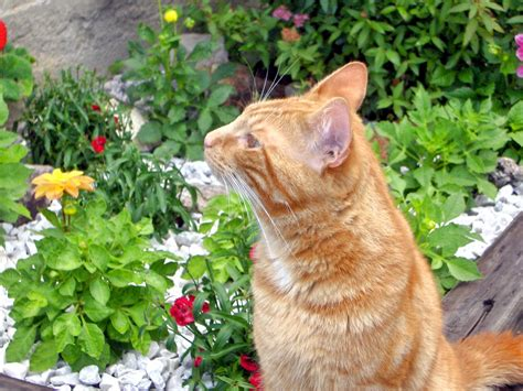 how to keep cats out of flower beds keep cats out of flower beds jessica l fisher