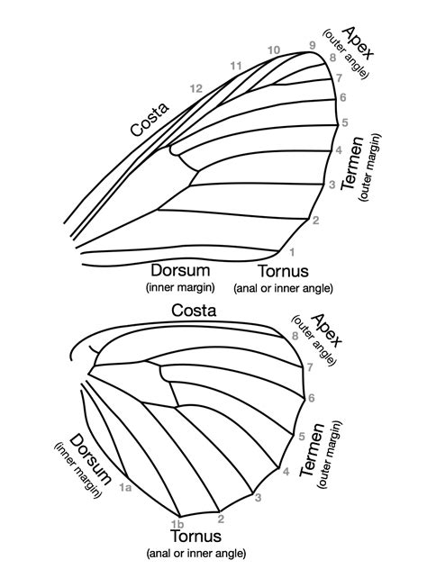 anatomy of a butterfly worksheet annahamilton me