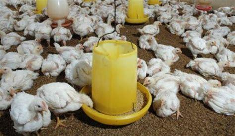 Afkir Untuk Ayam Broiler harga ayam broiler terbaru februari 2018 info harga terbaru