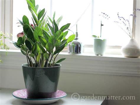 house plant ideas indoor plant ideas the zz plant garden matter