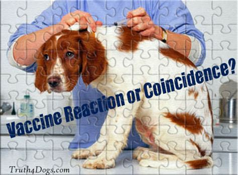 puppy vaccine reactions your s new health problem is it a vaccine reaction truth4dogs