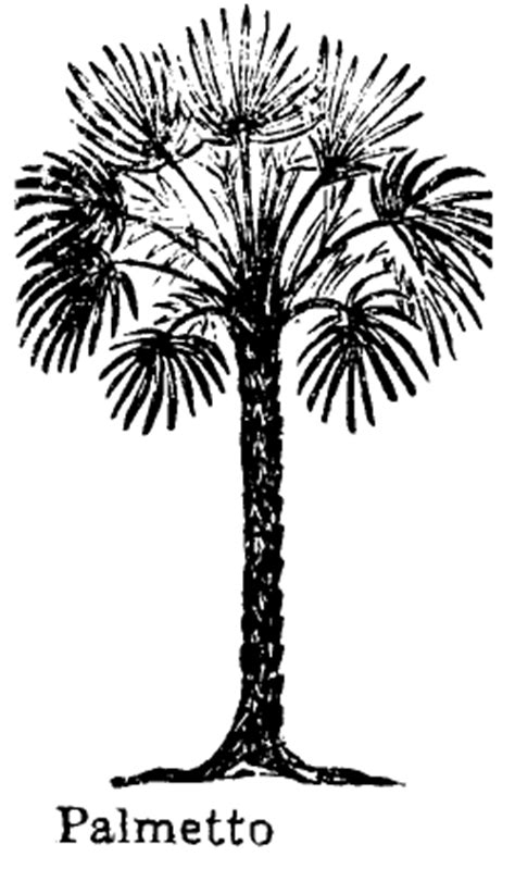 Coloring Page Of Sabal Palm Tree Pages