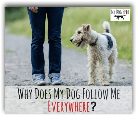 why does my follow me everywhere tips archives my spot pet sitters and walkers serving pasadena