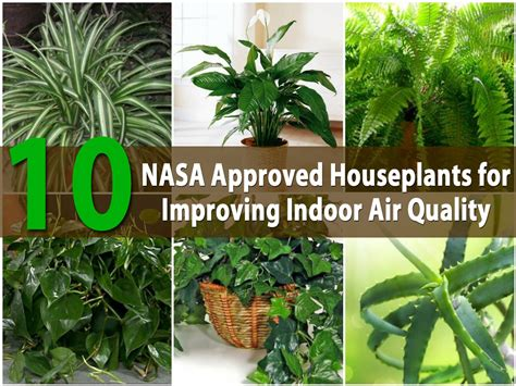 indoor plants to clean air top 10 nasa approved houseplants for improving indoor air