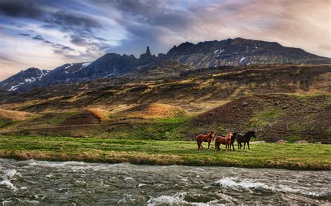 Landscape Pictures With Animals Landscapes Animals Horses Hd Wallpaper 448713