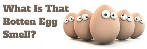 Rotten Egg Smell In House 28 Images What Causes A Rotten Egg Smell In A House