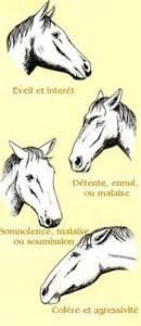comprends tu le langage des oreilles les galops