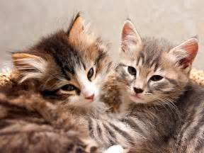 How to Be the Best Cat Foster Parent - Petfinder Bestofcats