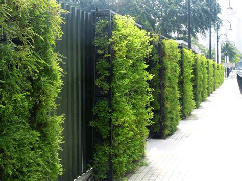 Green Wall 2 Ftr Ct Lb Green Wall Gardens