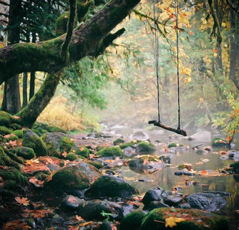 Forest Swing Top photography landscape trees nature magic scenery autumn