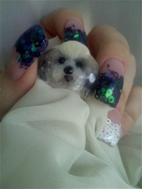 shih tzu nails shih tzu pendant nail gallery