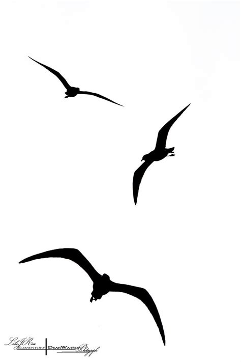 bird silhouette tattoo birds flying silhouette clipart best