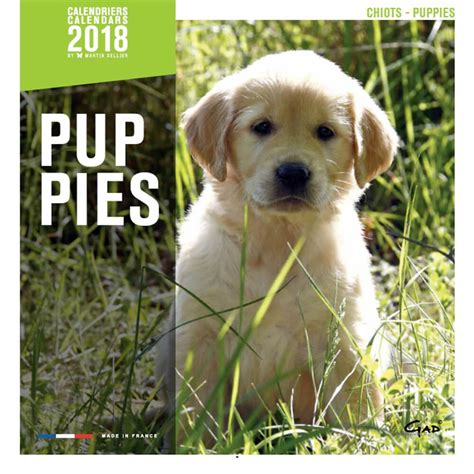 Calendrier Martin Sellier Race Chiots Calendrier Chien 2018 Martin Sellier