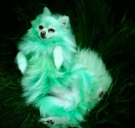 green puppy owner dyes beloved pet purple and blue because he s only happy when he has