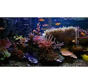 Fish Tank Wallpapers HD – Wallpapercraft