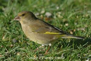 photos oiseaux de jardin
