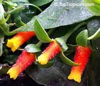 toptropicalscom rare plants  home  garden