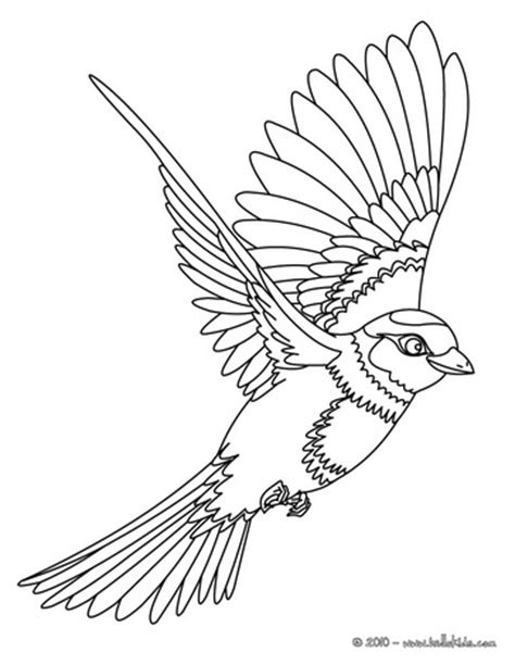 flying parrot coloring pages bird coloring pages 81 free birds coloring pages birds