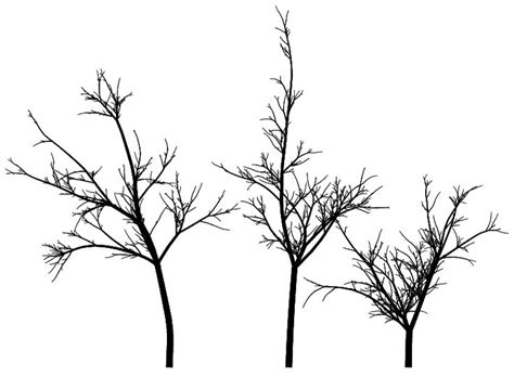 line drawings trees trees line drawing search cityscape line