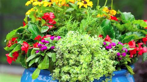 how to plant a cottage garden in a pot youtube