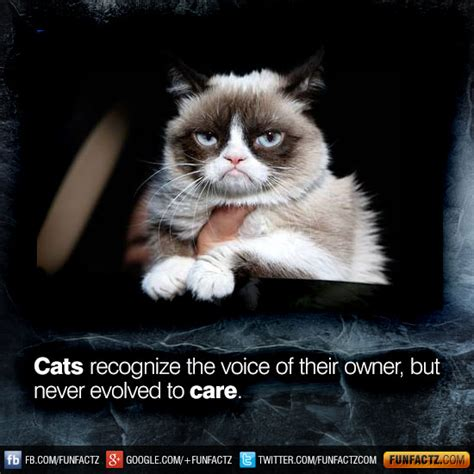 cats recognise the voice of their owner but never evolved