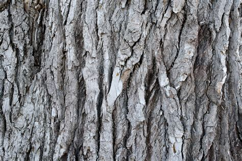 bark texture picture free photograph photos public domain