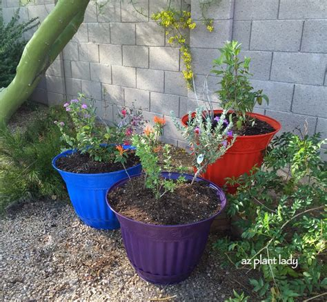 desert container gardening creating a hummingbird container garden ramblings from a