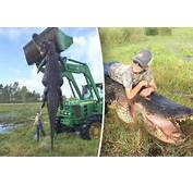 Giant Alligator Killed In Florida – 15ft Long And 100 Years Old