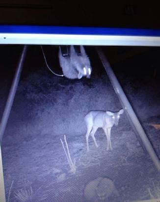 cam 4 con 18 unforgettable trail camera photos