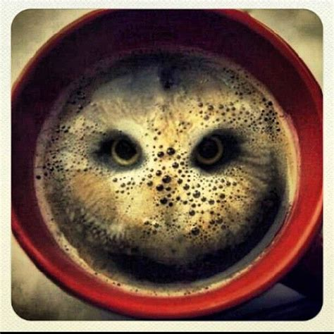owl coffee new year two hula hoops in a coffee owl cool stuff