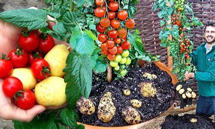 kartoffel gestell 3 tomtato pflanzen groupon goods