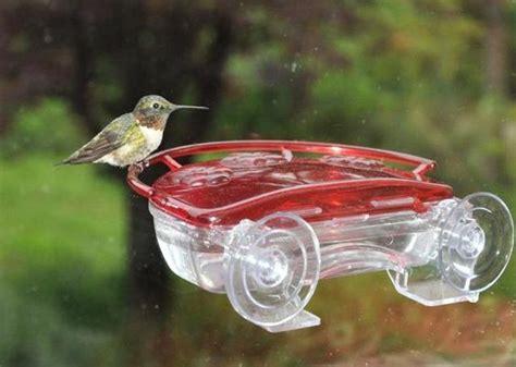 hummingbird nectar wild birds and hummingbirds on pinterest