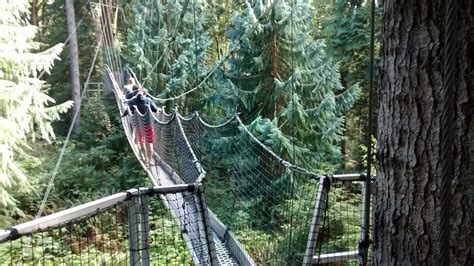 swing ubc ubc greenheart canopy walkway review simple vancouver