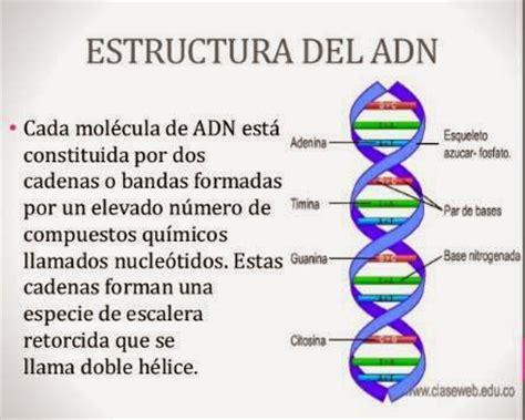 193 cidos nucleicos - Numero De Cadenas Del Adn