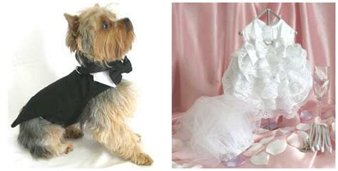 Wedding Attire Dogs by How To Help Your Get Comfortable Wearing Harnesses
