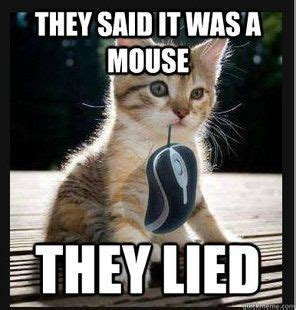Cute Kitten Meme - cute kitten meme with quot mouse quot cat memes pinterest
