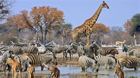 related keywords suggestions for in inglese animali related keywords suggestions for namibia wildlife