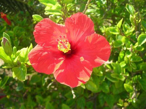 flower design malta from the royal private garden in malta flowers