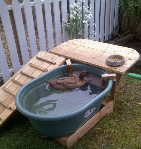 backyard duck backyard duck habitat how to build a duck deck