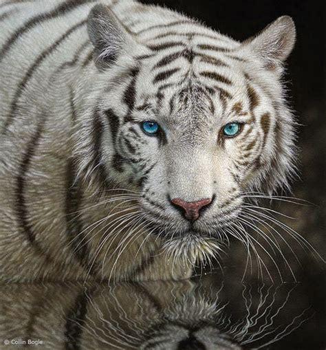 Imagenes Realistas De Animales | im 225 genes arte pinturas pinturas realistas al 211 leo de animales