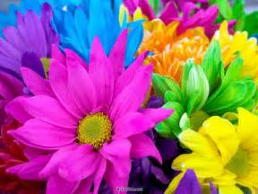 colors of flowers colors of nature flowers xcitefun net