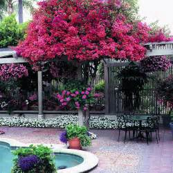 Patio Tree Standards Small Worlds Of Color Sunset