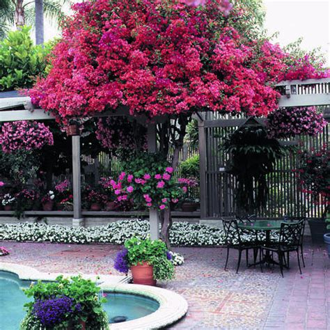 Trees For Patios by Standards Small Worlds Of Color Sunset