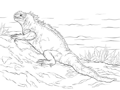 Click to see printable version of marine iguana coloring page