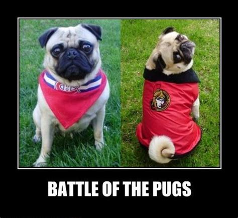 battle pug pugs images battle of the pug hockey fans wallpaper