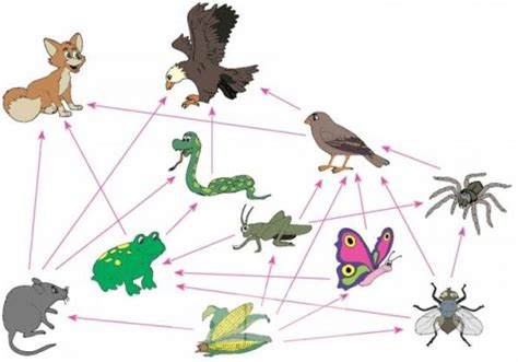 las cadenas alimenticias wikipedia para qu 233 sirve la cadena alimenticia cadena alimenticia