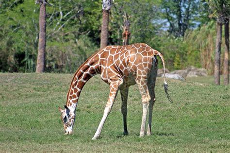 imagenes de animales zoologico banco de im 225 genes para ver disfrutar y compartir